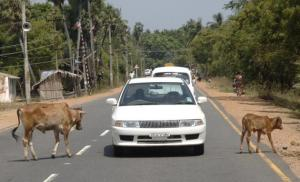 Photo: M. Karunakaran in The Hindu Feb 2012 This road has been paved & widened since I was there.
