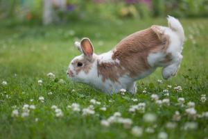 Blog hops are almost as cute as hopping bunnies.